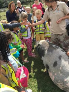 Petting zoo: meeting the pigs